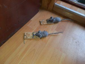 Museår og feik mus.