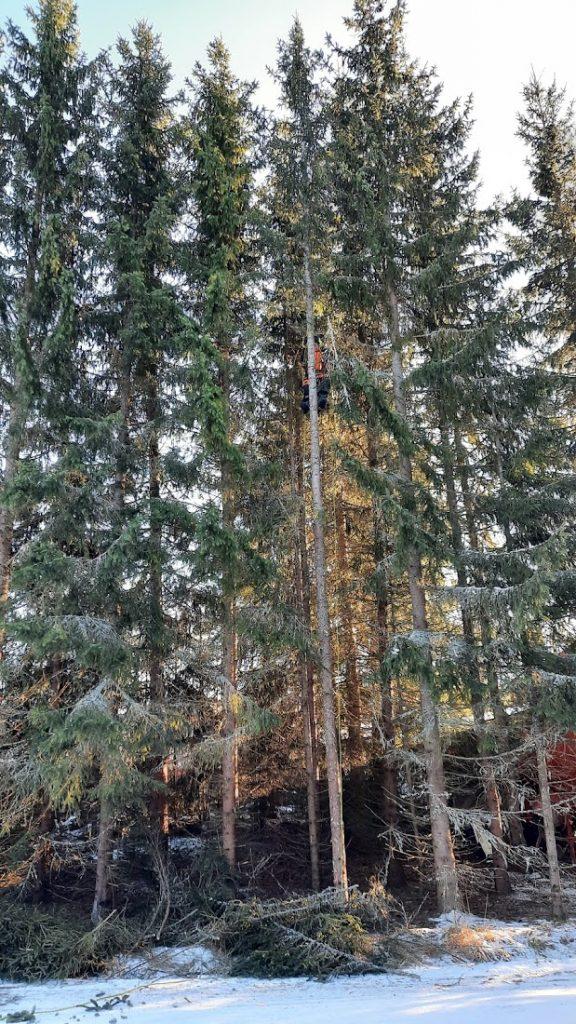Skjelden art oppservert oppi treet i skævven