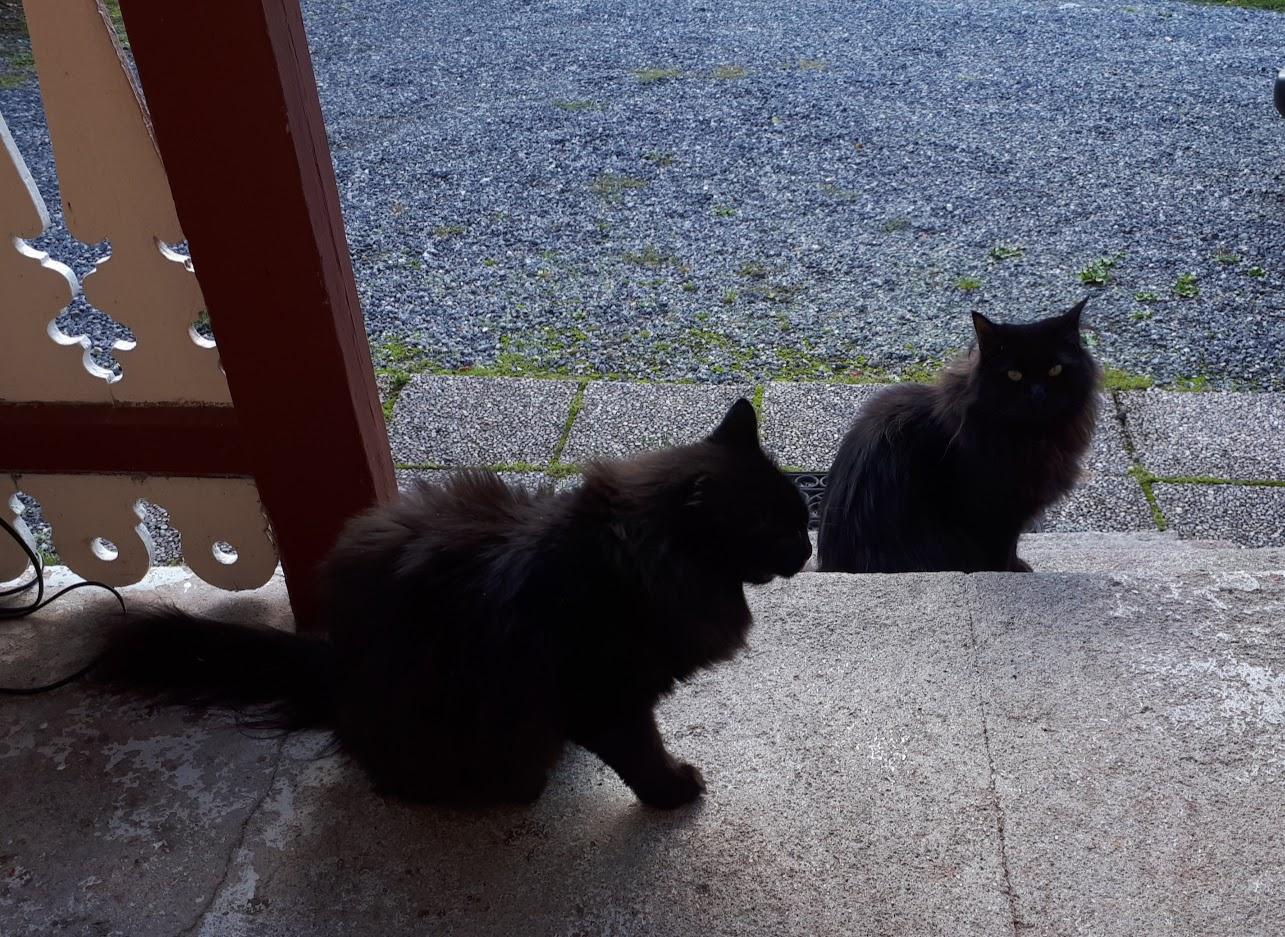 Kattene Bodil og Margot